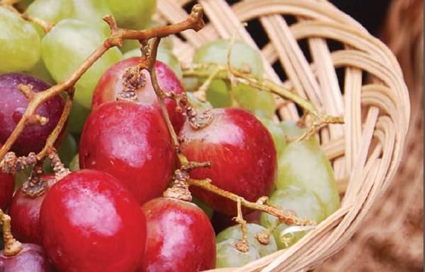Kandungan dan Khasiat Buah Anggur