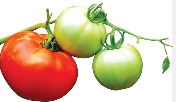 Grading dan Sortasi Buah Tomat