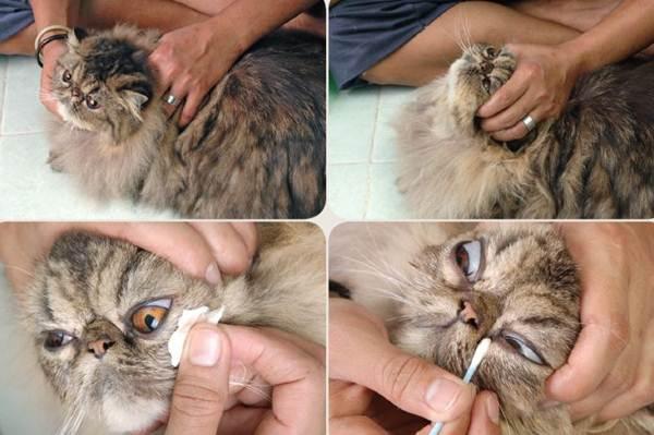 Merawat Mata Kucing