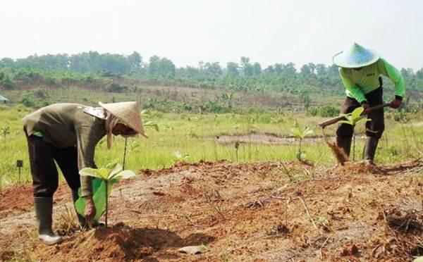 Fase Pertumbuhan Vegetatif  Tanaman Jati