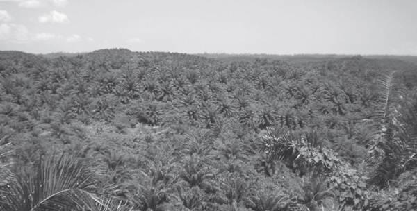 Kendala Perkebunan Rakyat dan Upaya Mengetasi