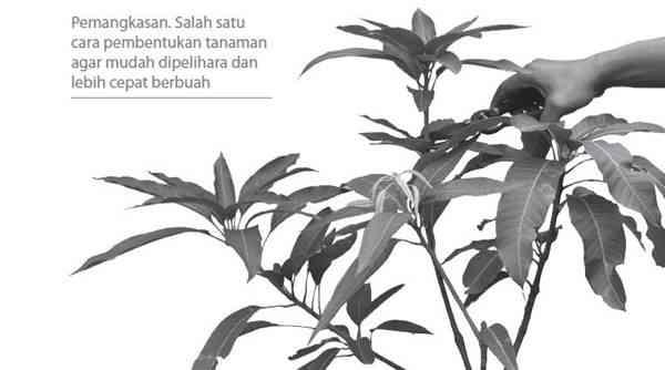 Pemangkasan tanaman