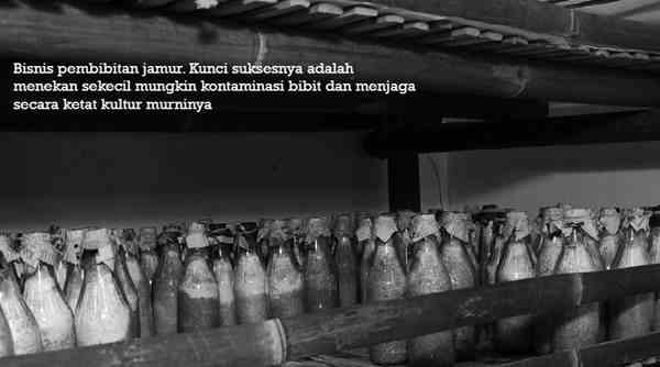 Prospek Bisnis Jamur