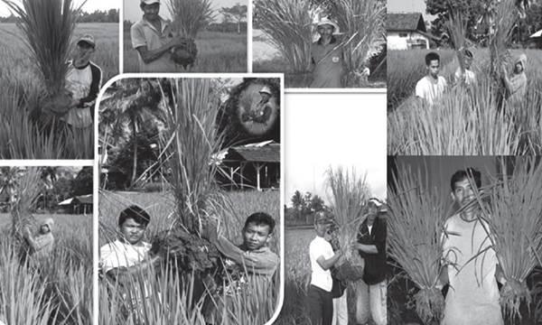 Butir Penting dalam Metode SRI Organik Indonesia