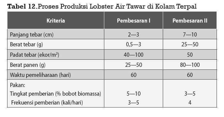 Pemeliharaan Lobster