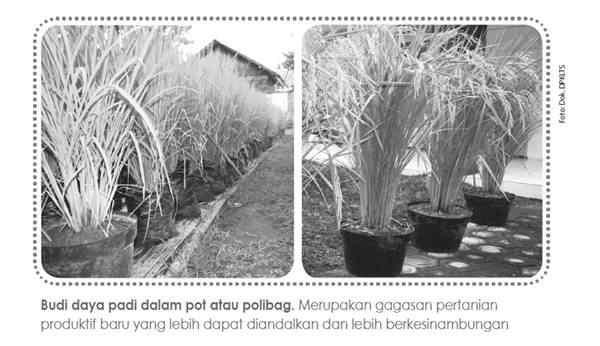 Pengembangan Tani Kota di Pot atau Polibag