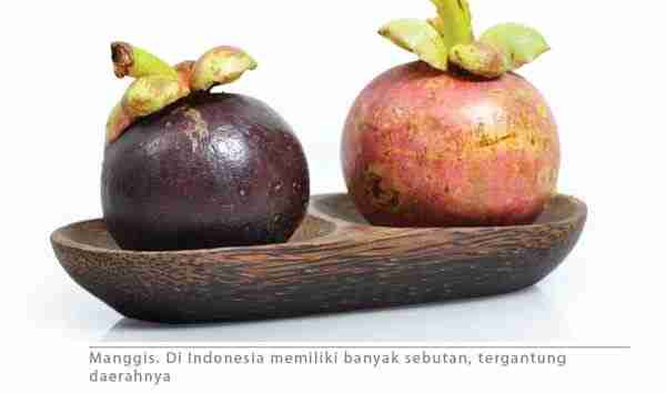 Sekilas Tanaman Manggis