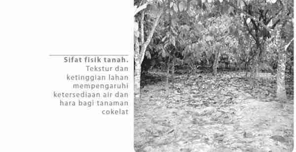 Sifat Fisik Tanah Tanaman Cokelat