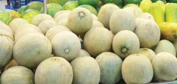 Berbagai Varietas Melon