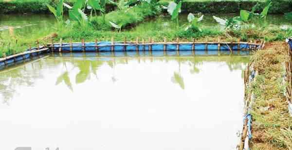 Gunakan Kolam Dalam Budi Daya Nila