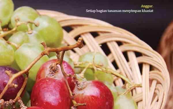 Kandungan dan Khasiat Anggur