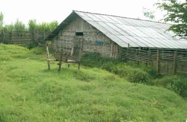 Lokasi Usaha Beternak Itik Hibrida