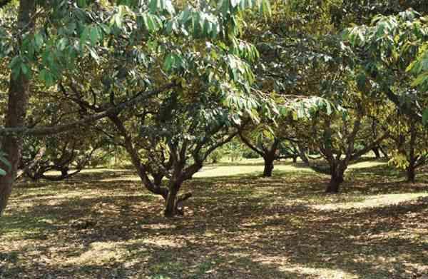 Menentukan Lokasi Bisnis Pertanian