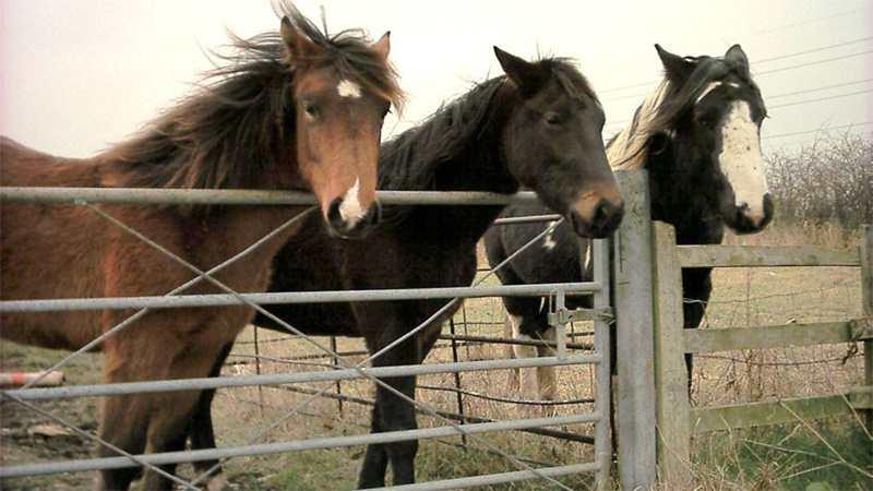 Tips Pemberian Pakan Kuda