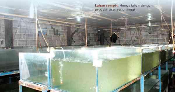 Hemat Modal, Keuntungan Bisnis Benih Ikan Maksimal