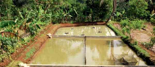 Kolam Pemijahan Ikan