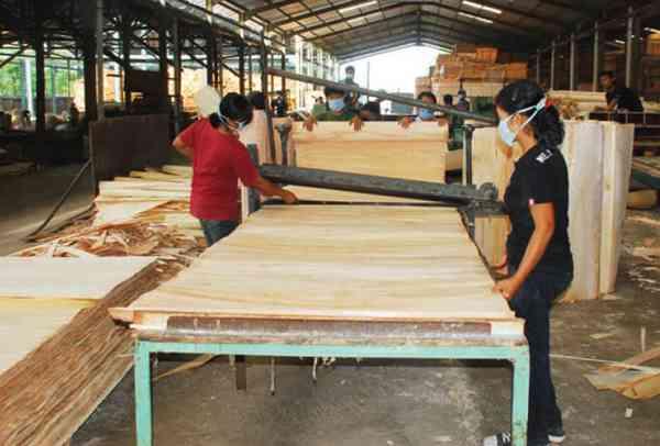 Pasar Sengon dan Kayu Jabon