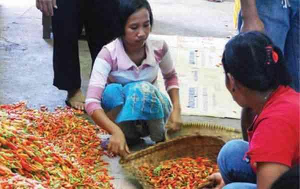 Peluang Pasar Cabai