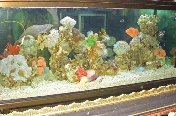 Beli Ikan Hias Air Laut yang Berkualitas