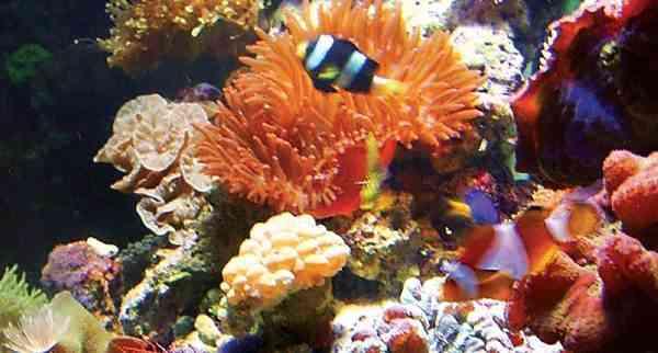 Ikan Hias Air Tawar atau Ikan Hias Air Laut