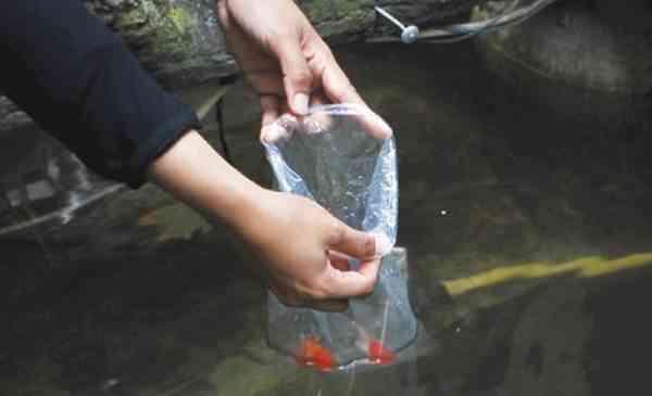 Karantina Bagi Ikan yang Baru Tiba