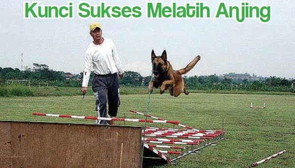 Kunci Sukses Melatih Anjing