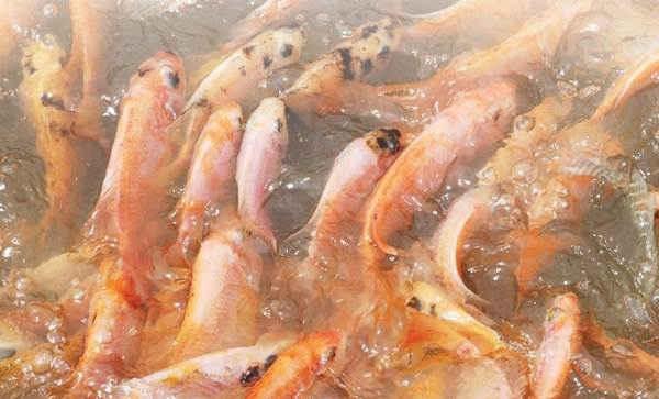 Mengenal Kebiasaan dan Pencernaan Ikan