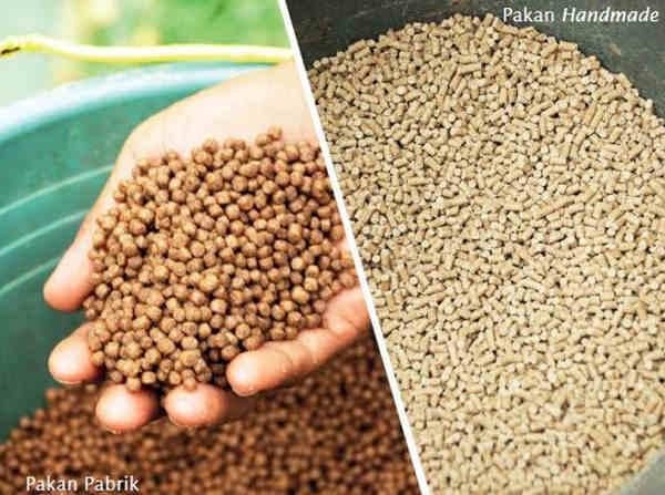 Pakan Lele Menghabiskan 70 Biaya Produksi Artikel Pertanian Terbaru Berita Pertanian Terbaru