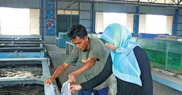 Pastikan Membeli Ikan Hias di Tempat yang sudah Terpercaya