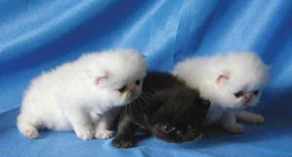 Tips Memilih Kucing Peliharaan