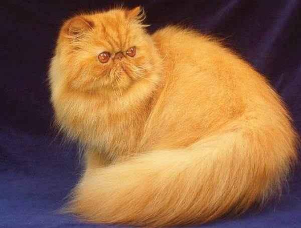 Ekspresi Ekor Kucing