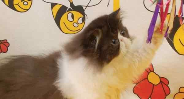 Indra Peraba Kucing