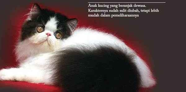 Membeli Kucing