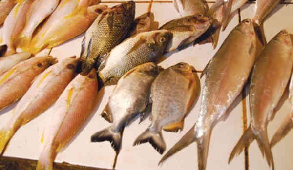 Memilih Ikan Untuk Kucing