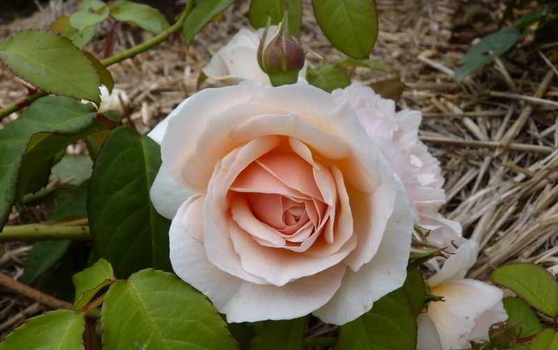 Beberapa Bunga Ini Mahal, Berminat Membelinya