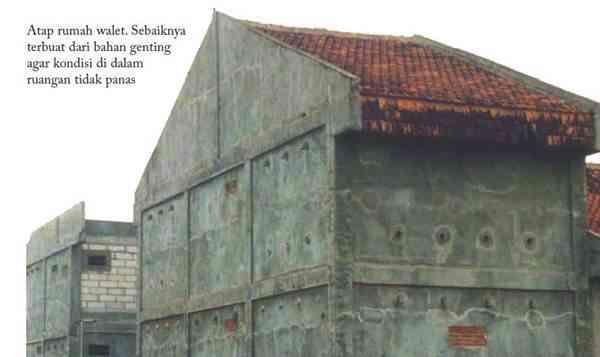 Bentuk dan Konstruksi Rumah Walet