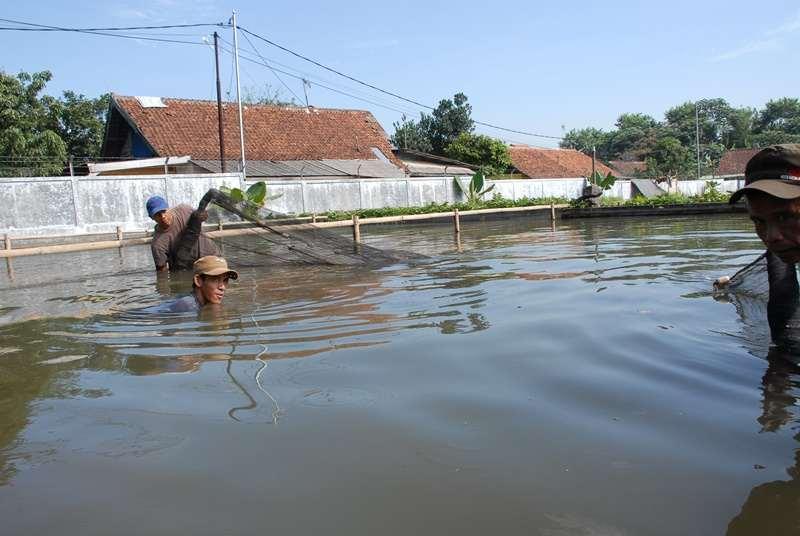 Pengelolaan Air Kolam Patin
