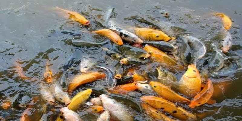 LIPI Tingkatkan Pertumbuhan Ikan