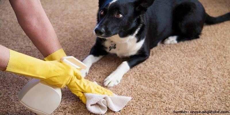 Menghilangkan Bau Hewan Peliharaan di Rumah