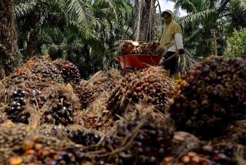 perizinan-usaha-perkebunan-kelapa-sawit