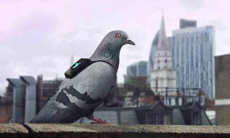 Pigeon Air Patrol, Merpati Pemantau Polusi Udara