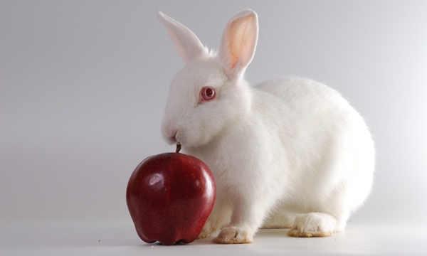 stress pada kelincii