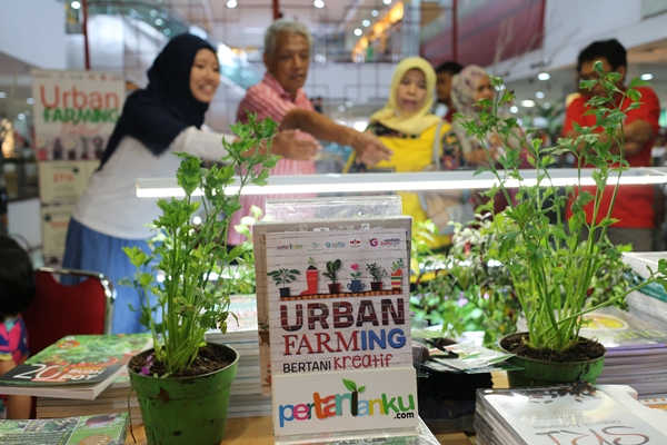 urban farming matraman (2)