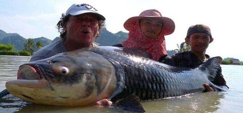 Awas Danau di Thailand Dihuni Ikan Raksasa