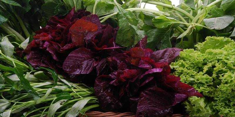 Benarkah Mencuci Sayuran dengan Air Efektif Menghilangkan Pestisida