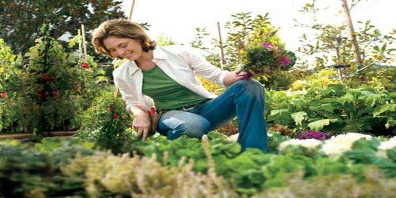 Bertani Membuat Jiwa Raga Tetap Sehat