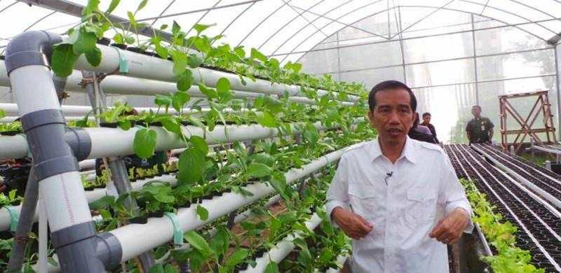 Green House Marunda Buatan Jokowi Menghasilkan Omset Besar