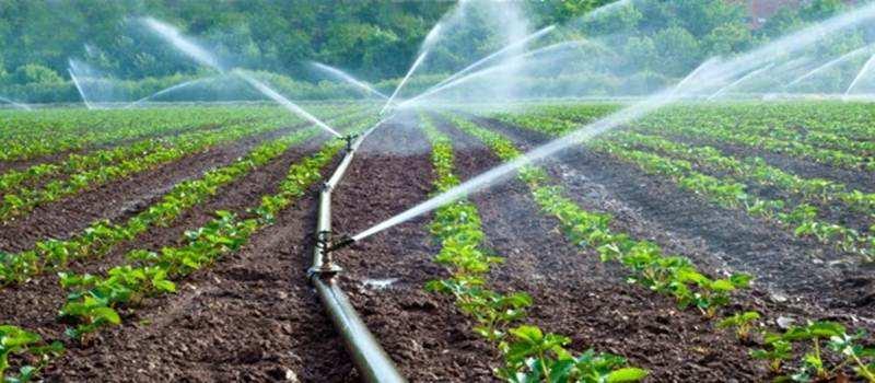 Hemat Air, Petani Malang Gunakan Sprinkle