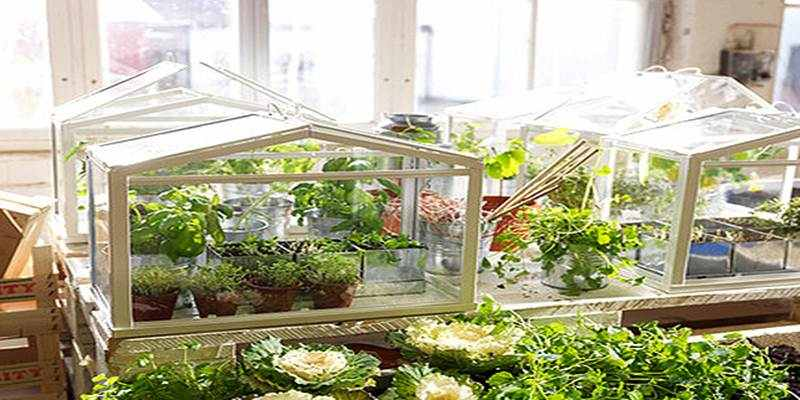 Hobi Mini Green House Portable