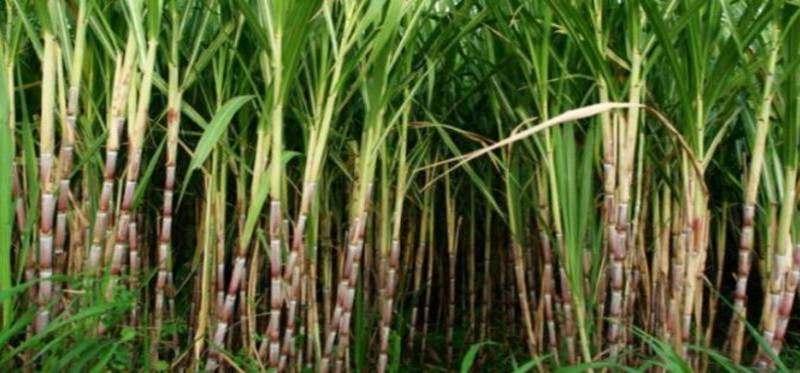 Kementan Ajak Investor Bangun Pabrik Gula
